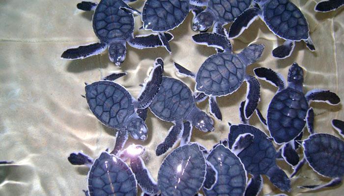 Isla Mujeres Turtle Farm